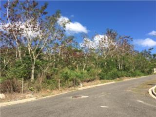 Remanente de Finca, Bo. Guatemala