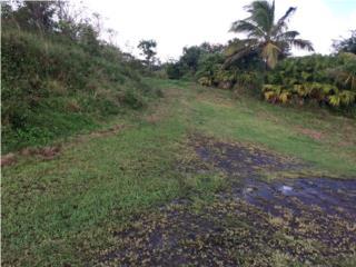 Bo. Llanos Calle Domingo Colon
