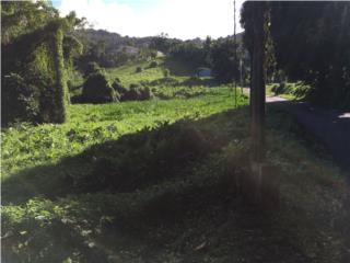 Carr.992 KM1.0 Bo Mata de Platano Luquillo