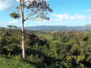 GANGA-Bo Lirios 22.5 cuerdas 60k
