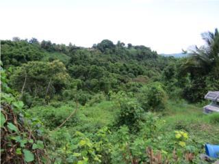 Bo. Ceiba Sur/100% Financiamiento!(1)