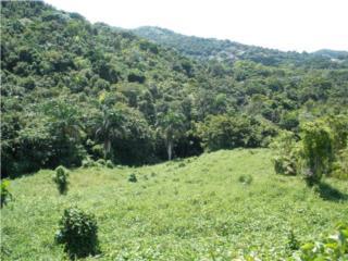 Mucha Naturaleza!!!