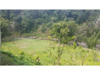 Riverfront, 7.25 acres, Bo Pezuela