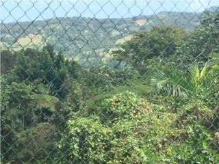 Finca semillana colinda con El Yunque carr.186