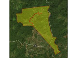 165 Acres in Coffee Country, Utuado