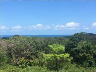 VIEQUES!! - Bo. Puerto Real - 2,105 mts2 Lot