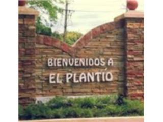 EL PLANTIO///HAZ TU OFERTA!!!