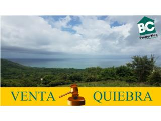 Maunabo 5 cuerdas Venta por Quiebra!