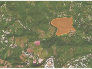 Finca de 63 cdas en Bo Llanos de Guayanilla