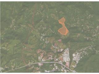 Finca de 90 cdas en Bo Llanos de Guayanilla
