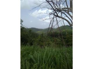 Hermosa finca 55 cuerdas Bo Rio Chiquito, Ponce