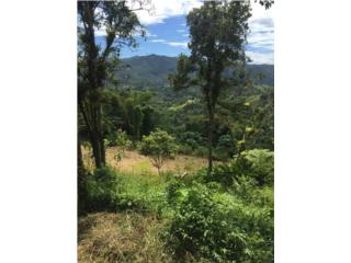 ¡Un Paraíso Terrenal en Guavate!