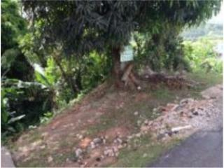 Carr. 782 Km. 7.9 Com. Naranjito Calle Begonia 83