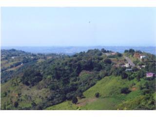 Finca de 290 acres entre Naranjito y Corozal