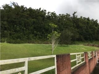 Terreno Urb. Manatuabon, Manatí