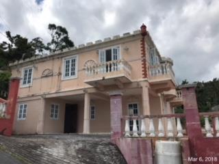 Mamey Puerto Rico