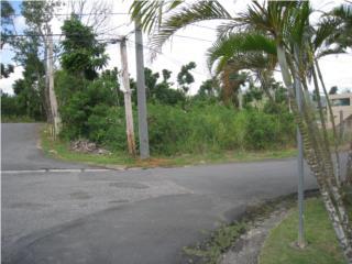 borinquen villa sauri