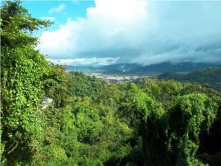 Bo. Quebrada Arena  solar 1,000MTs solo $25K