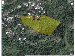 Bo. Guayabal Sector Lajitas Carr. 557