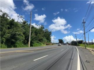 Carretera 167  Cerca Mall Rexville