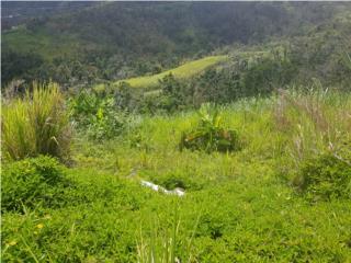 Cuerda de terreno en Helechal Barranquitas