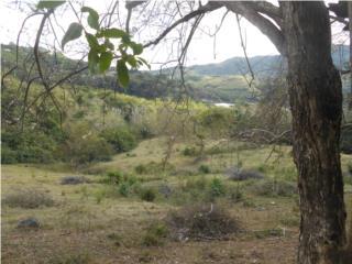 Terreno Lago Toa Vaca Villalba, PR