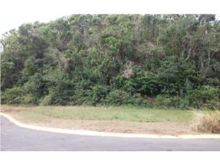 Hatillo, Bo. Campo Alegre, Carr 129 Km 8.1