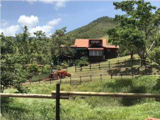 Hacienda Las Calabazas, Working Horse Ranch.