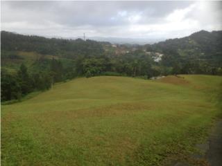 7.1 Cdas Guavate Cerca Parque Forestal