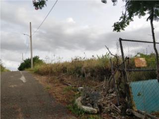 Ceiba Baja Puerto Rico