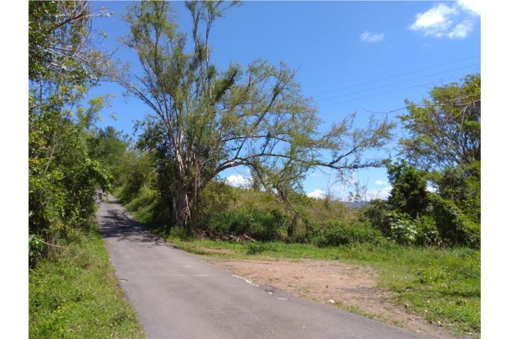 Minillas Puerto Rico