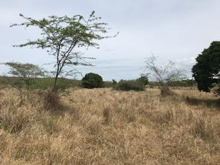 5 Acre Farm (dividable) in Sector Llanos Cost
