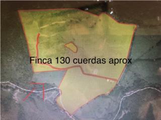 FINCA APROX 130 CUERDAS-RIO ARRIBA, FAJARDO