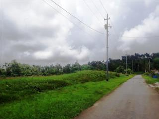 Sector Guayabota