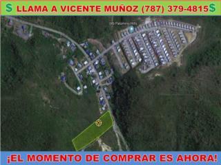 CARR 335 KM 3.5 INT - BARINAS * 3 CUERDAS *