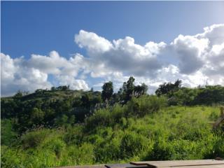En Lo Alto de Cedro Abajo en Naranjito