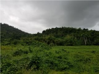 Finca Terreno Naguabo
