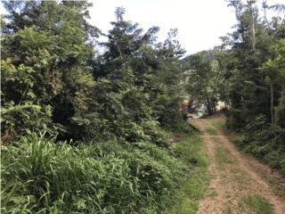 Venta de terreno de 14 cuerdas en Caguas