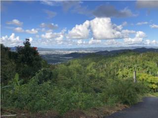 Bo. Borinquen, Sector los Cruces, Caguas