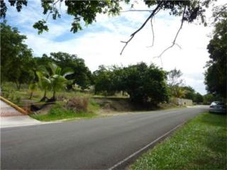 1/2 Acre on Premier Street in Palmas Del Mar