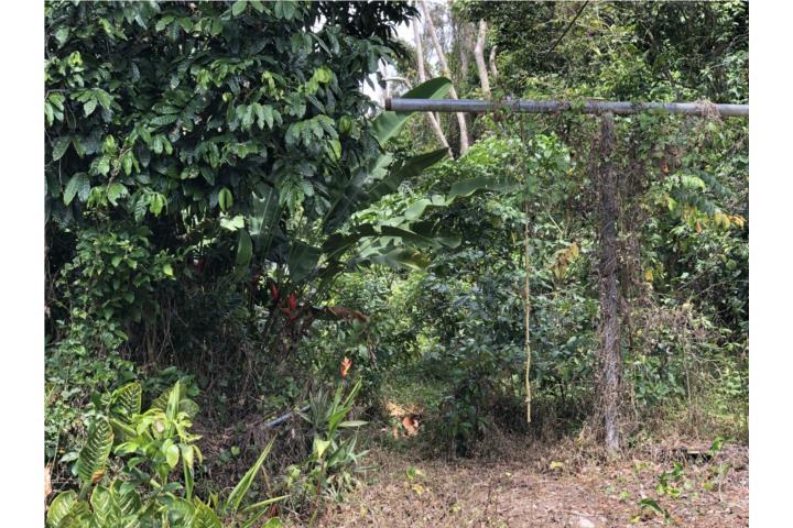 Cuyon Puerto Rico
