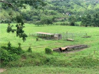 Finca agrícola de 70 cuerdas, 20 llanas aprox