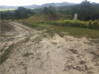 Terreno Juncos Ceiba Norte