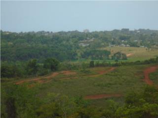 90 Cuerdas. Rolling-Hills. Zona Agricola