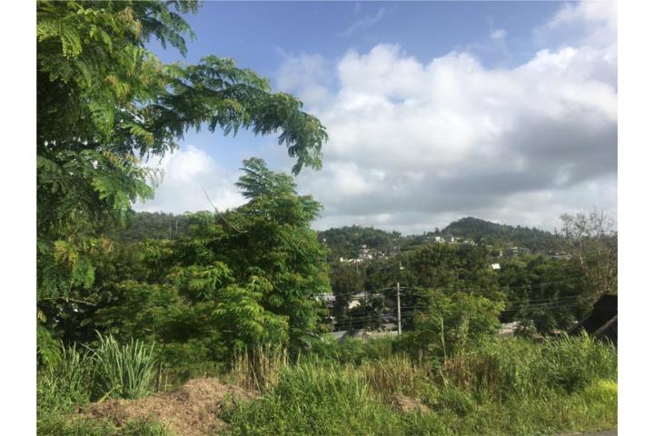 Lomas Coles Puerto Rico