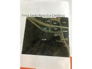 DORADO CANTERA EN SANTA ROSA 14.5 CDAS  650