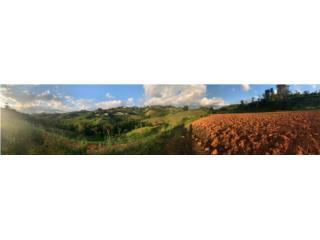 LAND OF 5 CDAS (4.9 ACRES) BARRANQUITAS PR