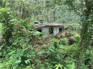 GUARAGUAO SECTOR LA CHORRERA- BAYAMON $29K