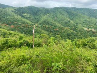 25 cuerdas terreno Bo. Carmen, Guayama