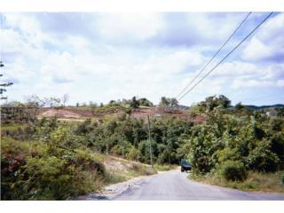 Solar en Camuy:955Mt. Bo. Sanja <St. Los Vega>